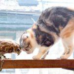 「猫の気持ちが知りたいホー」悩めるフクロウが、動物学者の先生にお悩み相談!