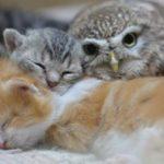 「フクロウと親友になったのはどうしてにゃ?」 疑問に思った猫が、動物学者に質問!