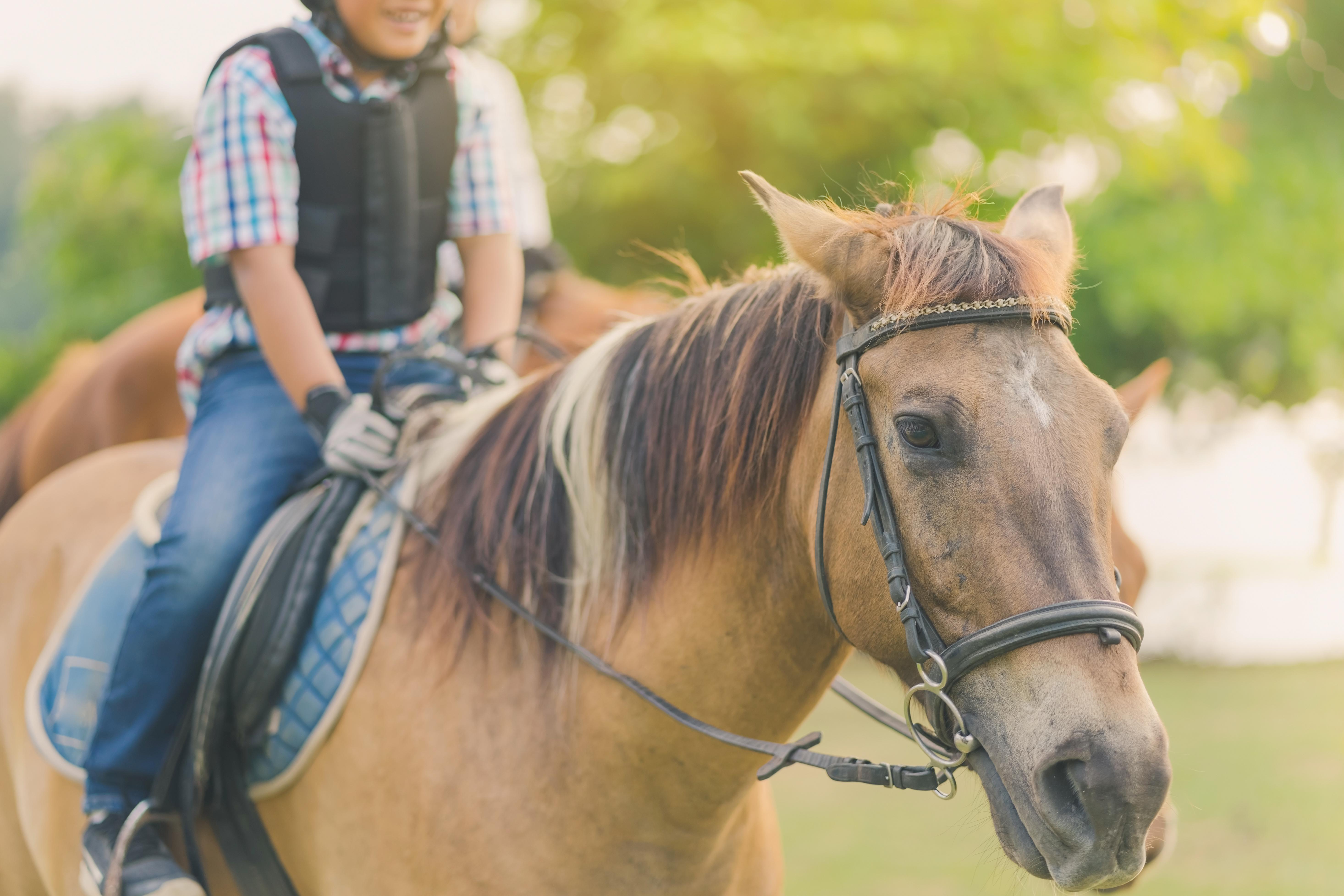 乗馬、習い事