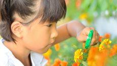 虫めがねで花を観察する女の子