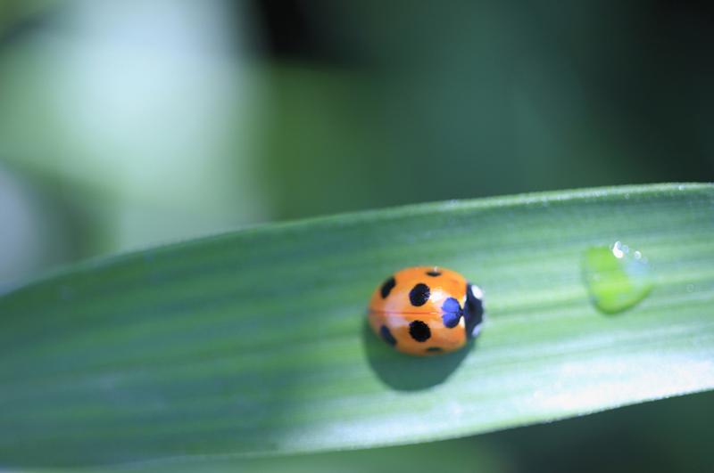 てんとう虫におすすめの餌は何?