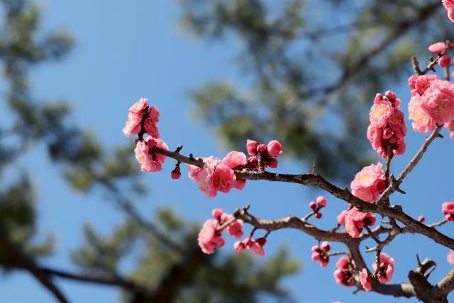 の 候 立春