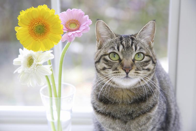 ネコの日とは