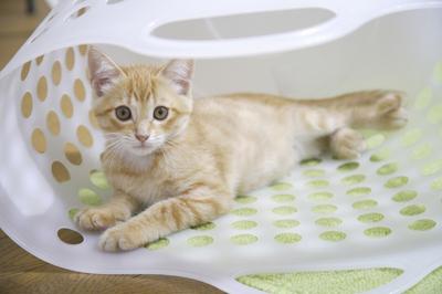 「ネコの日」以外にもある!世界のネコ記念日